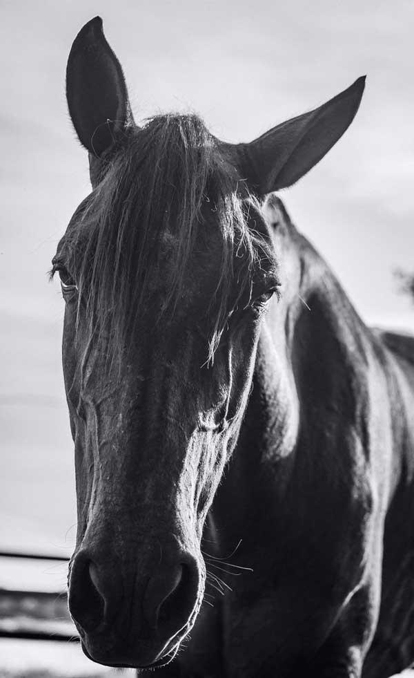 arion-coachinghorse-white-black